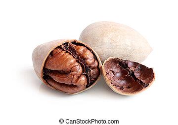 White pecan nuts