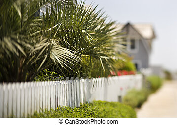 White picket fence with palms.