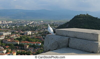 White pigeon above the city