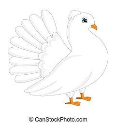 White pigeon, dove