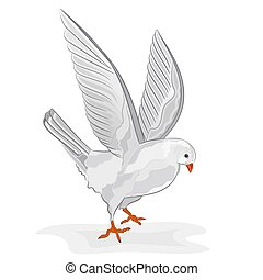 White pigeon in flight vector.eps