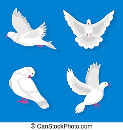 White pigeons in various poses isolated on blue background