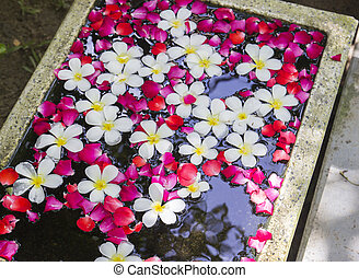 white Plumeria and roses floating on water basin