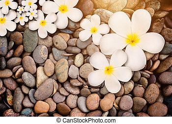 White plumeria flower on wood background