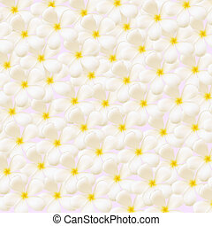 white plumeria flowers closeup background