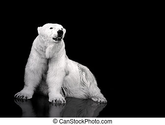 White Polar Bear Hunter - sitting