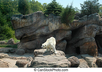 Polar Bear - White Polar Bear standing on rocky ledge