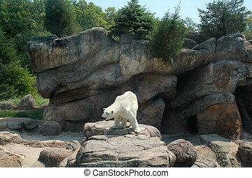 White Polar Bear standing on rocky ledge