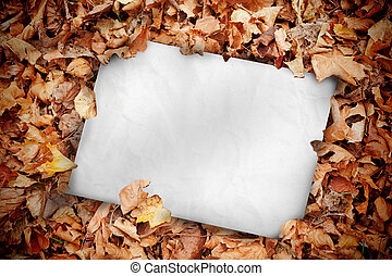 White poster buried into dead autumn leaves