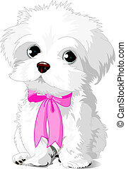 A cute white Havanese puppy posing with pink ribbon