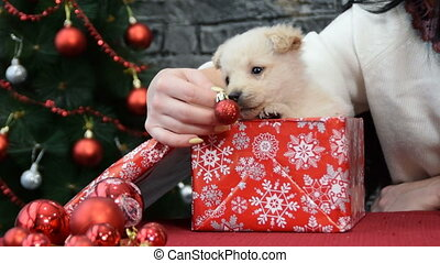 white puppy in holiday spirit surrounded by New Year's decoration