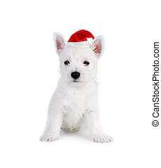 white puppy on white background