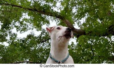 White puppy outdoors pov