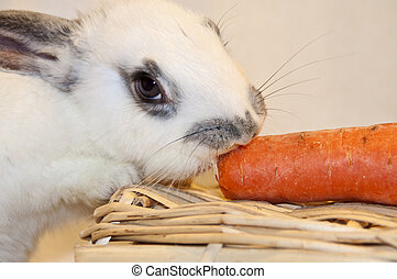 white puppy rabbit eating a carrot