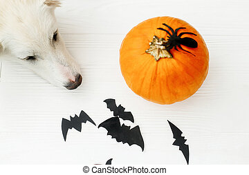 White puppy relaxing at pumpkin on white background with bats and spider decorations, celebrating halloween at home. Trick or treat!