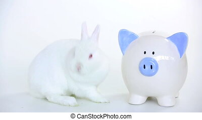White rabbit beside a piggy bank and someone puts cash in on...
