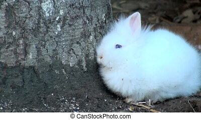 white rabbit in the grass