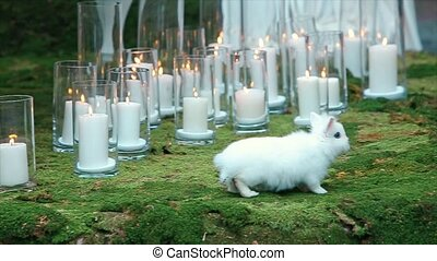 White Rabbit on Green Moss wedding decoration