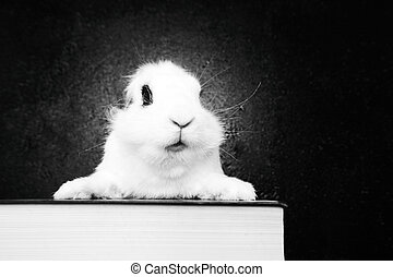White rabbit on the dark background