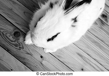 White rabbit on the wooden background