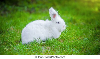 White rabbit outdoors