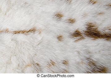 rabbit skin - white rabbit skin with whit spots