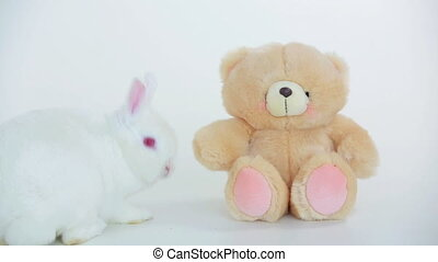 White rabbit sniffing teddy bear on white background