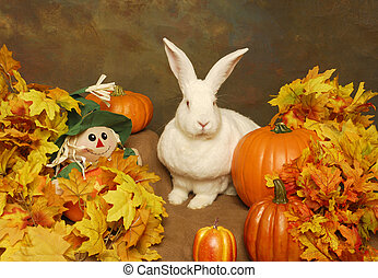 White Rabbit with Pumpkins and Stuffed Scarecrow