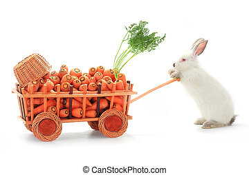 white rabbits  - one white rabbits vnut carrots