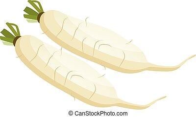 White radish roots vector illustration of vegetables on...