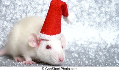 white rat in santa christmas cap on silver background. close-up. symbol of 2020. copy space
