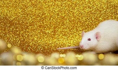 white rat on a gold background. close-up. Symbol of 2020. Copy space. symbol of wealth and abundance.
