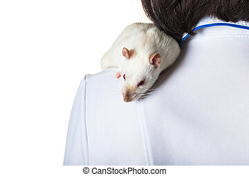 white rat sits on the shoulder