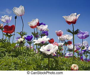white red and purple flower field - white red and purple...