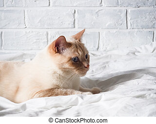white red cat lying on a white bed against a brick wall, resting, freelance work from home, online profession