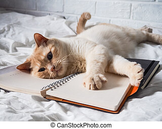 white red cat lying on a white bed against a brick wall, resting, freelance work from home, online profession. the cat is playing with a Notepad