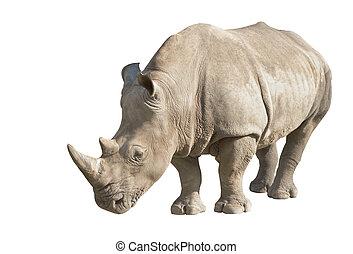 white rhino on a white background
