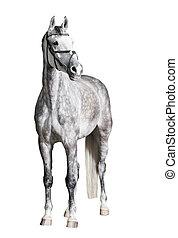 White riding horse isolated