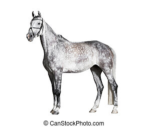 White riding horse side view isolated