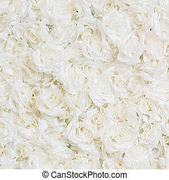 White rose background - Close up white rose texture...