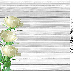 White rose flowers on white wooden background