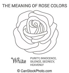 White rose infographics, vector illustration isolated on...