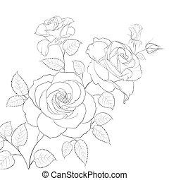 White rose isolated.