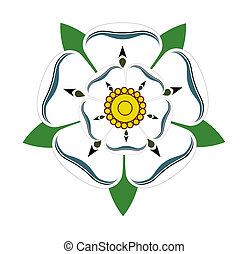 White rose of Yorkshire - White Rose of Yorkshire isolated...