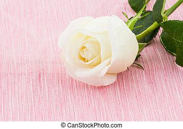 White rose on fabric background.