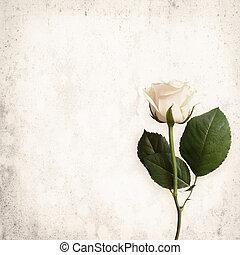 White rose on vintage background