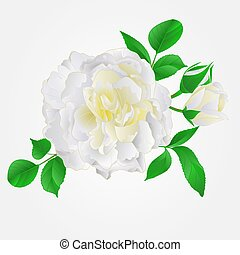 White Rose with buds and leaves vintage vector.eps