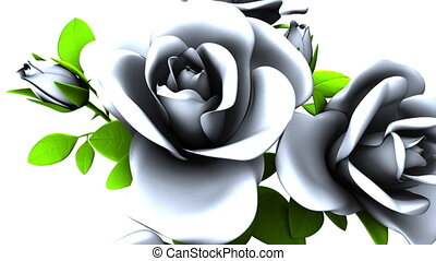 White roses  bouquet on white background