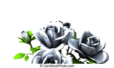 White roses bouquet on white text space. Loop able 3DCG...
