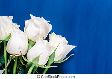 white roses flat lay on a classic blue background. Top view